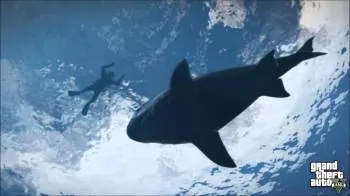 No, not that kind of shark...